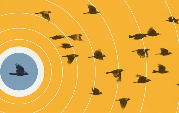 franchise_digitale-oiseaux