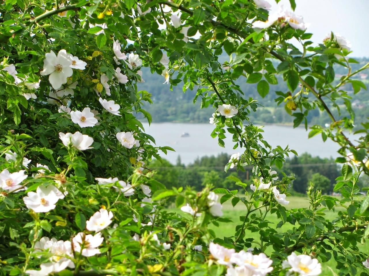 fleurs-terramie